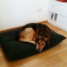 DIVAN Uno dog cushion, size 80 x 100 cm, color graphite. Bruno from Italy sleep very well on his new dog bed! http://www.pet-interiors.de/de/divan-uno-fleece-hunde-liegekissen_artnr151521