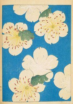 Japanese spring blossom - Via Shin-bijutsukai