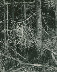 Paul Strand: Dark Forest, Georgetown, Maine, 1928