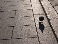 il piccione a spasso di domenica - avevo promesso di smetterla coi piccioni, almeno temporaneamente, ma poi mi sono ricordato di questa foto scattata a febbraio. Ero convinto di averla già pubblicata qui, invece no, e sarebbe un peccato non farlo.