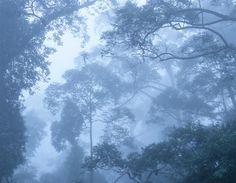 Rainforest, Sabah, Borneo (Malaysia)