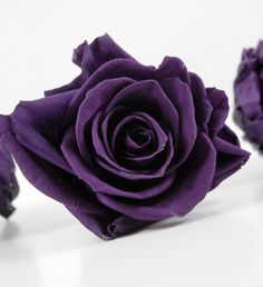 """Preserved Roses Deep Purple Large Rose Heads (3"""" wide) 4  for $24"""