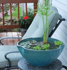 jardin aquatique en pot de céramique pour la terrasse