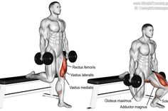 Dumbbell Bulgarian split squat exercise