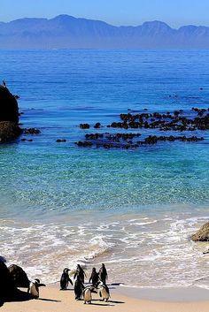 Boulders Beach - África do Sul