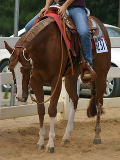 now thats a show horse ladies and gentleman.
