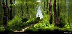 IAPLC_Going Home_Kaeru  looks just like a walk through a forest