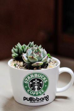a plant that minimal window light won't kill in an genius planter! :)