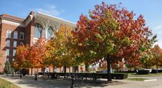 Changing fall colors in front of W.T. Young Library.
