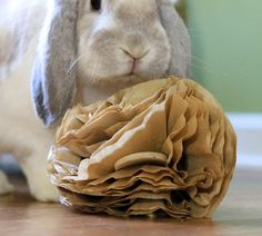 Coffee filter rabbit toy — The Buzz on Enrichment