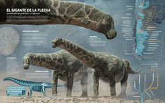 The biggest dinosaurs ever discovered, Quo Magazine November 2014. Final infographic. Art by Román García Mora.