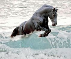 Black horse jumping the wave. Black horse jumping the wave. All The Pretty Horses, Beautiful Horses, Animals Beautiful, Simply Beautiful, Black Horses, Wild Horses, Dark Horse, Zebras, Horse Pictures
