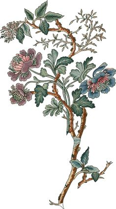 Botanical Flowers, Flowers Nature, Draw Flowers, Black Flowers, Red Roses, Flower Art Images, Chinese Paper Cutting, Paisley Art, Garden Types
