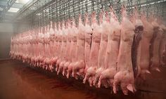 #ABasedeSoja: Criação industrial é um dos piores crimes da histó...