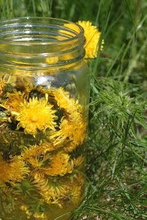 Husfrøy: Løvetann - fandens melkebøtte? Taraxacum, Make A Wish, How To Make, Dandelion Wish, Crazy Day, Magic Forest, Farm Life, Wild Flowers, Mason Jars