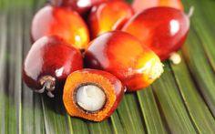 Olio di palma: rispetta la salute e l'ambiente? In questi ultimi mesi sull'olio di palma è stato detto davvero di tutto e spesso senza alcuna coeren olio di palma grassi saturi salute