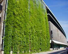 Green walls are essentially a living, and therefore self-regenerating, cladding system using climbing plants. Even small, difficult spaces have potential. Architecture Design, Green Architecture, Facade Design, Fence Design, Pergola Patio, Pergola Kits, Pergola Designs, Plant Wall, Plant Decor