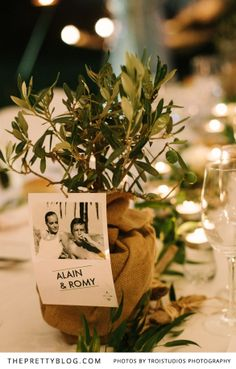 Olive trees as small gifts for guests | Photographers: Troistudios Photography