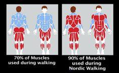 Benefits - Nordic Walking Experts - Nordic Walking Shop