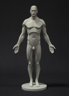 Win a Male Planar Anatomy Figure from 3dtotal   Parka Blogs