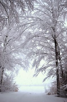 Forest, Snow, Nature ~ Dreamy Nature
