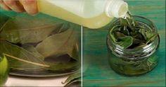 É uma planta medicinal poderosa, utilizada no tratamento de vários distúrbios de saúde.
