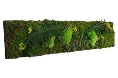 Tableau Végétal Stabilisé 90 x 30 cm (cadre mur décoration végétale) Decoration, Cactus Plants, Herbs, Amazon Fr, Design, Wall Of Frames, Wall Art, Handmade Gifts, Home Ideas