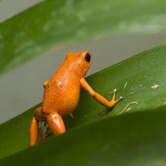 Google Image Result for http://acidcow.com/pics/20100623/orange_color_animals_15.jpg