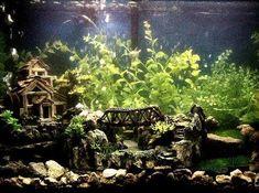 29 Gallon Fish Tanks (page 12) | RateMyFishTank.com