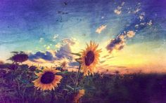 Imagem de sunflower, flowers, and sky