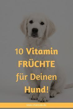 Vitamin rich fruits for dogs - Cats and Dogs House Food Dog, Cat Food, List Of Animals, Animals And Pets, Animal List, Fruits For Dogs, Schnauzer Grooming, Red Cat, Dog Hacks