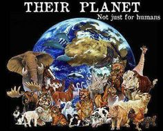 It's their planet too. They do no harm.❤
