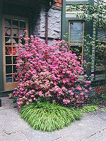 Plants and shrubs for the north side of your house.