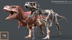 ArtStation - Tyrannosaurus Rex Anatomy , Vitamin Imagination Dinosaur Images, Tyrannosaurus Rex, Prehistoric, Emperor, Anatomy, Beast, Lion Sculpture, Creatures, Horses