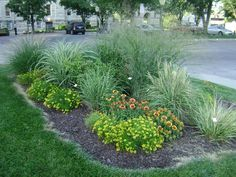 Unique Tall Grass Landscaping Plants : Decorative Tall Grass ...
