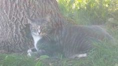 Kijiji Alberta > Calgary > community > lost & found > Ad ID 502642690 Wanted: Cat Missing from 4600 block of Hubalta Road S.E