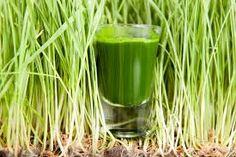 """Résultat de recherche d'images pour """"Ma santé dans les herbes"""""""