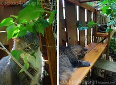 屋外猫のエンクロージャを楽しむ猫
