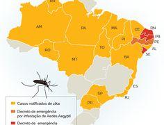 Piauí e Alagoas decretam estado de emergência por Aedes e microcefalia