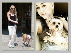 """Miley Cyrus's Morkie was attacked and killed with a single bite to the neck by Ziggy, her """"English Bulldog"""", Ziggy (see photo). Pit bulls were created by combining the old style bulldogge with terriers. The bulldog had the powerful bite and the terriers had the ferocity and quickness. Miley's bulldog is obviously not a modern-day round-looking English bulldog. It appears to be a bulldog/pit or bulldog/boxer mix, the result being similar to a pitbull. She rehomed Ziggy after the attack…"""