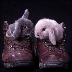 Bunnies in shoes... OK, you hop on 3 and then it's my turn.