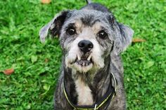 Far from being scary, Milo is a kind natured dog looking for a new family this spooky season