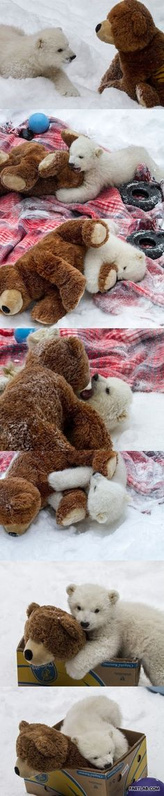 Not related to Bearmaking, but it is too cute!!  Real Polar Bear and a Teddy Bear!