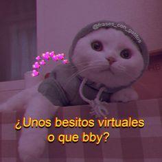 Fb Memes, Funny Memes, Cute Cat Memes, Cute Phrases, Funny Phone Wallpaper, Aesthetic Words, Disney Memes, Mood Pics, Meme Faces