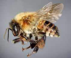 Stingless Bees: Mayan's Golden Treasure Threatened By Monsanto's GMO Soy Fields