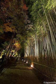 Japaninfo added 21 new photos to the album: Arashiyama ภายใต้แสงโคมในฤดูหนาว@Arashiyama Hanatouro/Kyoto — at 嵐山.