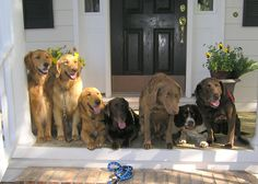 Pups pose for a group photo during a recent team building meeting of the Canine Angels Service Dog and Therapy Dog contingents.