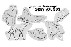 Greyhound Gesture Drawings by becsketch.deviantart.com on @deviantART