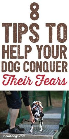 8 Tips To Help Your Dog Conquer Their Fears