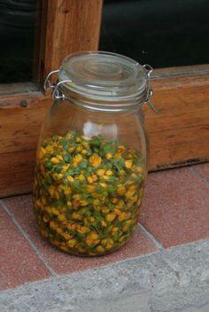 Calendula, Aromatherapy, Mason Jars, Soap, Herbs, Witchcraft, Nature, Beauty, Canning